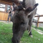 bardi - 04-09_164-bartolo_de_bard.jpg